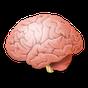 Tes IQ & Kepribadian 9.2.37
