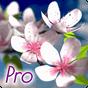 Spring Flowers 3D Parallax Pro 1.0.2