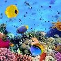 Ícone do apk Buscando a Nemo rompecabezas