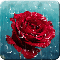 Rose Raindrop Live Wallpaper Android