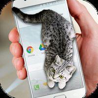 귀여운 스크린 고양이의 apk 아이콘