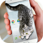 Telefonda Yürüyen Kedi Şaka 1.1