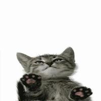 Gato lambendo tela