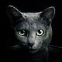 Найди кота 4.1.0