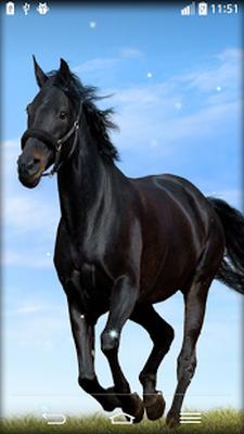 Scarica Lapk Di Cavallo Sfondi Animati 60 Gratuitamente Per Android