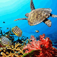 Ícone do apk Aquarium Live Wallpaper
