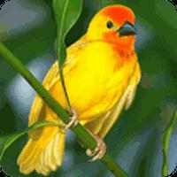 Ícone do apk Aves 3D Live Wallpaper