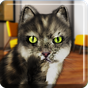 Gato falando engraçado 1.93
