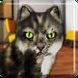 Cat Talking Gracioso 1.85