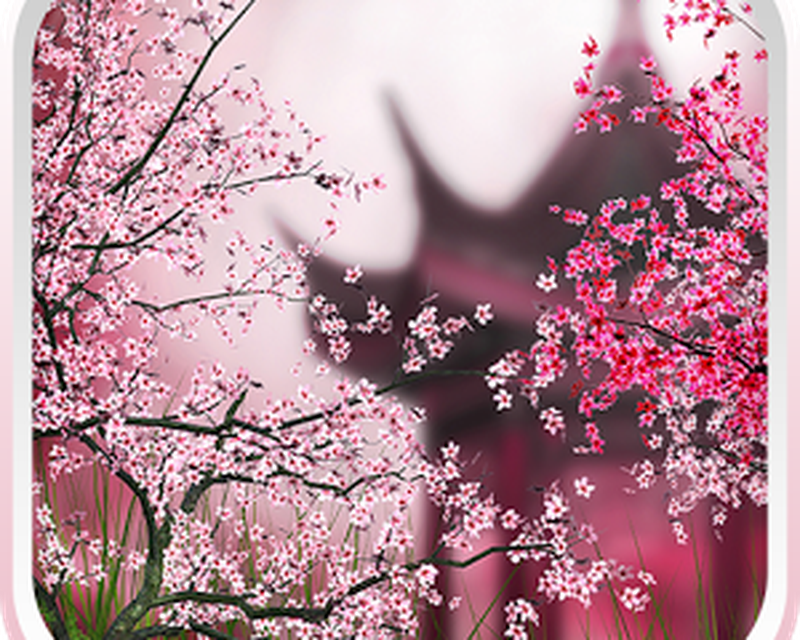 Sakura Live Wallpaper Android Free Download Sakura Live
