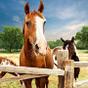 Los hoteles de mi hotel caballo: caballos de tren 1.0.1
