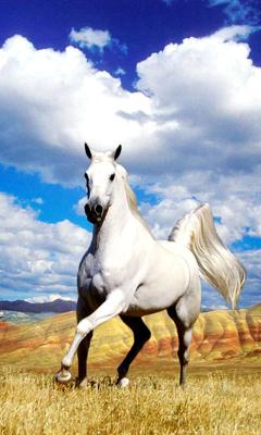 Cavallo Sfondo Animato 71 Download Gratis Android