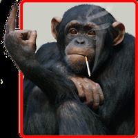 APK-иконка Забавная обезьяна живые обои