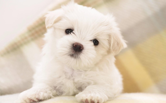 Puppies Live Wallpaper Android - Free