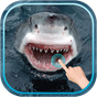 Magic Touch Shark Attack 1.2 APK