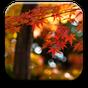 Autumn Wallpaper 1.0.3