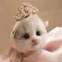 Kedi Duvar Kağıtları Sevimli 1.7 APK