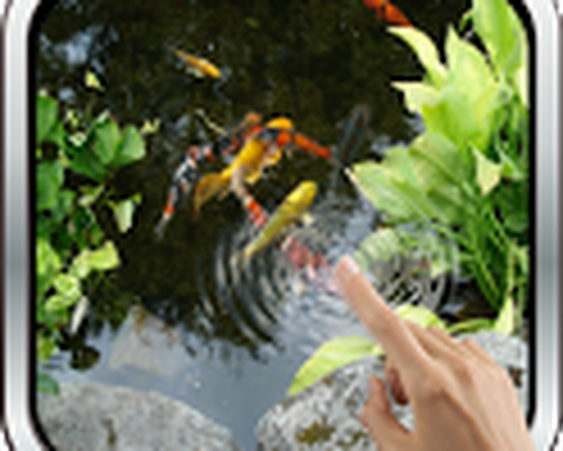 Realistic Koi Live Wallpaper Android Free Download