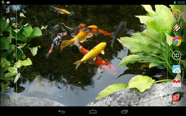 Realistic Koi Live Wallpaper 60 Android Descargar Gratis