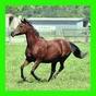 馬:家族のためのパズル 1.07 APK