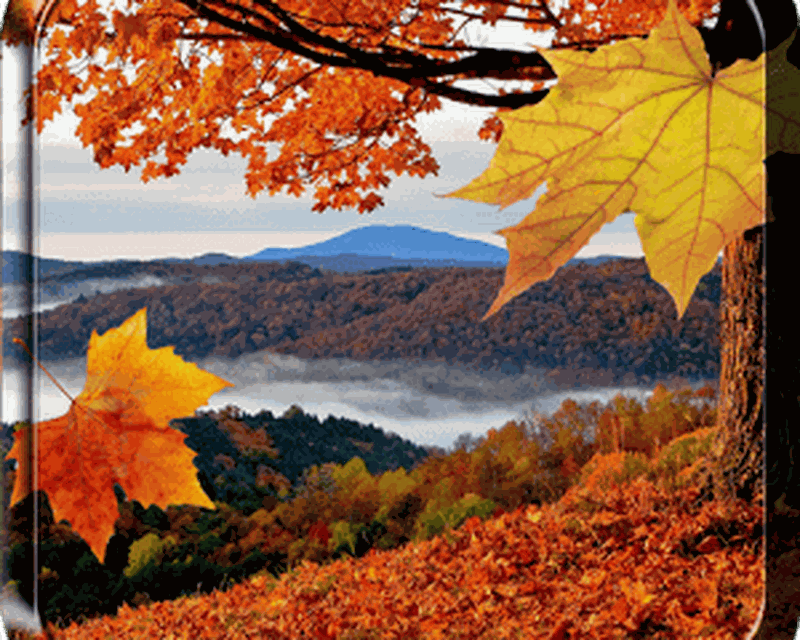 Falling Leaves Live Wallpaper Android Top Live Wallpapers