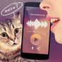 Translator for cats Simulator  APK