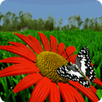 Ícone do apk Fundo Dinâmica borboleta x