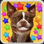 DOG SMILES LIVE WALLPAPER 1.0