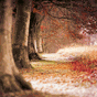 Wallpaper Nature Free HD 7.4
