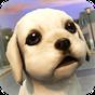 강아지 달리기! 1.3.0 APK