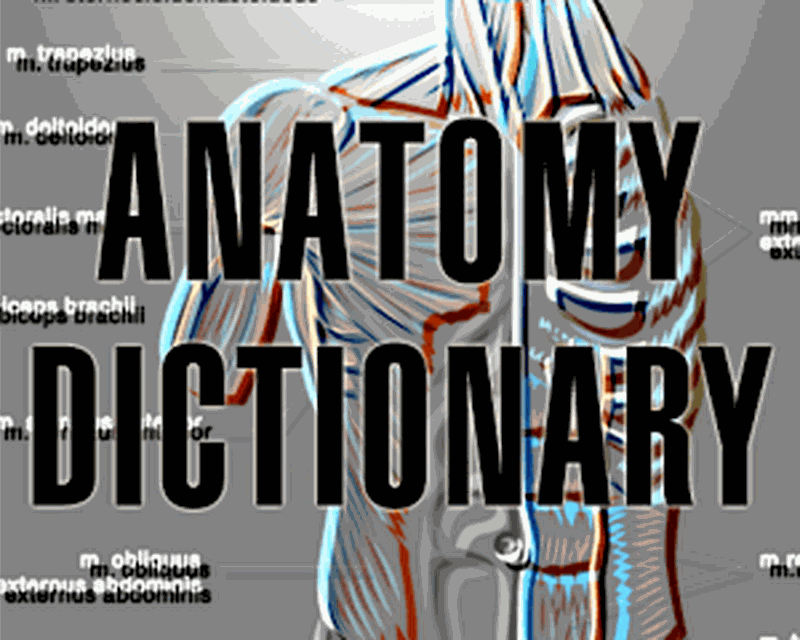 Download Human Anatomy Dictionary 10 Free Apk Android