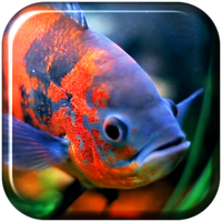 Aquarium 3d Video Wallpaper Android Free Download Aquarium 3d