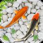 pescado vivir papel pintado 2018 acuario koi fondo 1.7