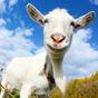Crazy Goat FREE  APK