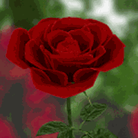 3d Rose Live Wallpaper Android Free Download 3d Rose Live