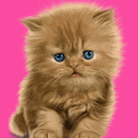 Bayi Kucing Lucu Wallpaper Android Free Download Gambar Walpaper