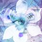 Blue Iris 2.0.45