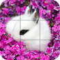 Puzzle - coelhos bonitos 1.25