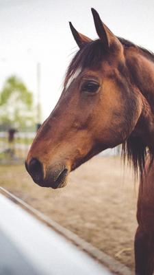 Cavallo Sfondi 415 Download Gratis Android
