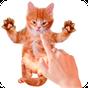 Bens gato falante  APK