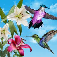 Ícone do Aves viver papel de parede.