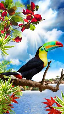 Download 1000+ Wallpaper Cantik Hidup HD Terbaik