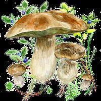 Ikona Aplikace na houby