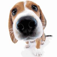 Cute Dog Sniffs Live Wallpaper Simgesi