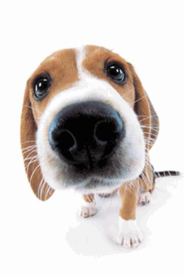 Cute Dog Sniffs Live Wallpaper Image 1