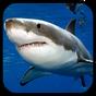 Sharks. Video Wallpaper 1.03