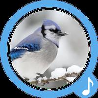 Vogelzang Gratis Beltonen APK icon