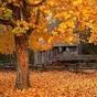 Outono vivo wallpaper