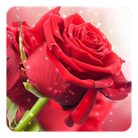 Red Rose Live Wallpaper Android Free Download Red Rose Live
