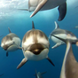 Dolphins Live Wallpaper 7.0